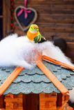 Little colorful bird toy. Little colorful bird toy sits on a small wooden cottage made for winter birds Stock Photos