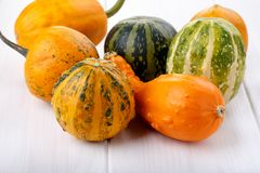 Little colorful ornamental pumpkins squash gourds stock photo