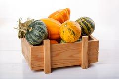 Little colorful ornamental pumpkins squash gourds stock image