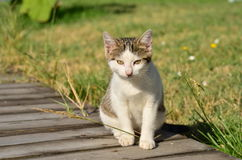 Little common cat Stock Images