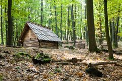 Little cottage in autumn forest. Forest landscape with loghouse in the autumn sunny day Stock Photo