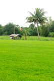 Little cottage in green rice field Royalty Free Stock Image