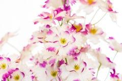 Little counterfeit flower Stock Photos