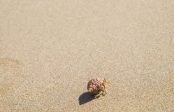 Little crab on the beach Stock Photography