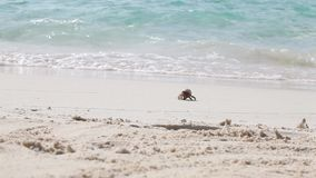 A little crab is running over the beach stock video