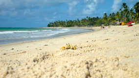 Little crab on Tamandare beach, Pernambuco, Brazil Royalty Free Stock Image