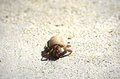 Little Crab. Trying to reach de sea stock photography