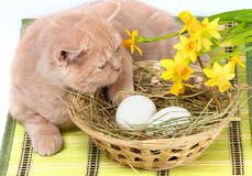 Little cat lying near the basket Stock Photo