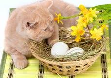 Little cat lying near the basket. Little cream cat lying near basket with white eggs stock photo