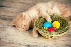 Little cat near the basket with colored eggs Royalty Free Stock Photography