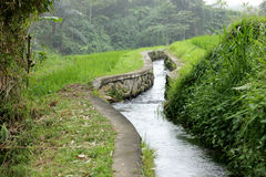 Little creek. Photo image with vegetation and creek in bali royalty free illustration
