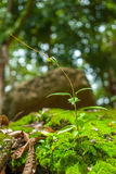 Little creeping plant Stock Image