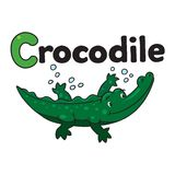 Little crocodile or alligator, for ABC. Alphabet C Stock Photos