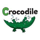 Little crocodile or alligator, for ABC. Alphabet C. Children  illustration of little funny crocodile or alligator swims in the lake. Alphabet C Stock Photos