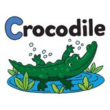 Little crocodile or alligator, for ABC. Alphabet C. Children vector illustration of little funny crocodile or alligator swims in the lake. Alphabet A Stock Image