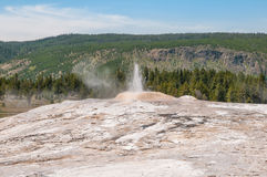 Little Cub Geyser Stock Images