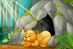 Little cub sleeping in the cave Stock Photography