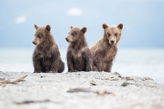 Little cubs waiting for his mother bear Royalty Free Stock Photos