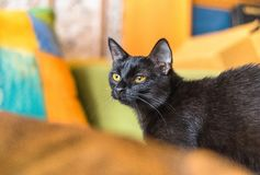 Little curious black cat on a background of bright yellow and orange cushions. Little curious black cat sitting on a background of bright yellow and orange stock photography