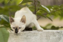 Little curious cat staring and playing around. Beautiful eyes. M. Acro photo Stock Photography