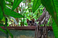 Little curious and frightened gray kitten on a fence among the greenery royalty free stock photography