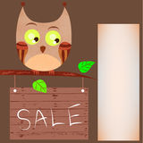 Little curious owl looking at the sign Royalty Free Stock Images