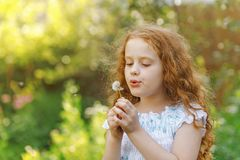 Little curly girl blowing dandelion. royalty free stock photography