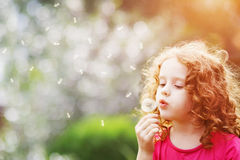 Little curly girl blowing dandelion. Stock Photos
