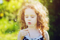 Little curly girl blowing dandelion in sunset. Background toning Royalty Free Stock Image