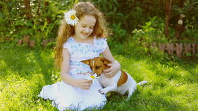 Little curly girl with daisy in hair playing with puppy jack russell. stock video