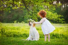 LIttle curly girl playing with big dog in summet day on nature background Stock Image
