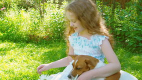 Little curly girl playing with jack russell dog. Happy friends at nature stock video