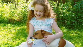 Little curly girl playing with jack russell dog. stock video footage