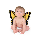 Little Cute Baby Butterfly On White Background Royalty Free Stock Images