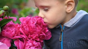 A little cute baby gently enjoys the smell of flowers. The child picks up a flower and inhales its fragrance. Blossoming. Blossoming buds of peonies. A little stock photography