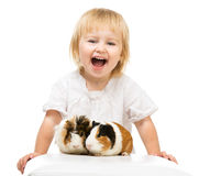 Little cute baby girl with guinea pigs Royalty Free Stock Photos