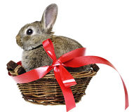 Little cute baby rabbit in a basket Royalty Free Stock Photography