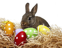 Little cute baby rabbit and painted easter eggs Royalty Free Stock Image