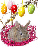 Little cute baby rabbit and painted easter eggs Stock Image