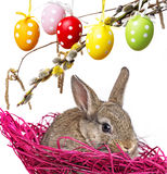 Little cute baby rabbit and painted easter eggs Stock Photos