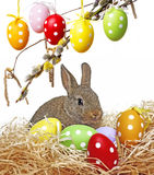 Little cute baby rabbit and painted easter eggs Royalty Free Stock Images