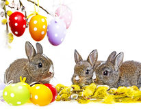 Little cute baby rabbits and painted easter eggs Royalty Free Stock Image