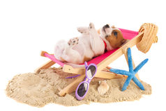 Beach puppy stock images
