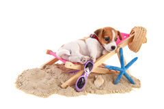 Beach puppy stock photography