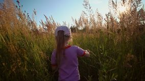 Little cute blonde girl walks through tall flowering grass across the field. Child pushes aside tall stems and makes her way across field on clear sunny day stock video