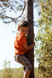 Little cute boy climbing on tree Royalty Free Stock Photography