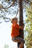 Little cute boy climbing on tree Stock Image