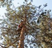Little cute boy climbing on tree hight Royalty Free Stock Image
