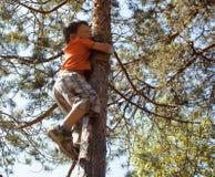 Little cute boy climbing on tree hight Royalty Free Stock Photo