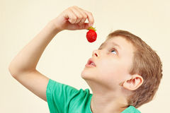 Little cute boy eating fresh ripe strawberry Royalty Free Stock Photo